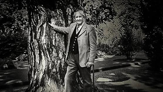 Tolkien'in Ağacı'nı Kurtarmak için İmza Kampanyası