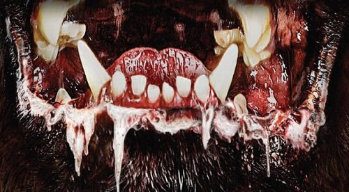 """Stephen King'in """"Kujo""""su Yeniden Sinemaya Uyarlanıyor"""